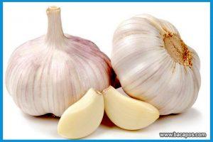 Manfaat bawang putih bagi kesehatan dan khasiat bawang putih untuk menyembuhkan penyakit