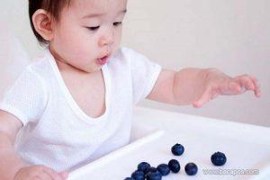 Manfaat blueberry untuk mpasi bayi atau si buah hati