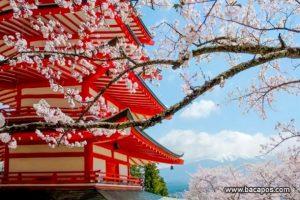 Tempat wisata terbaik di jepang, terkenal dan populer di dunia, wisata favorit hingga saat ini
