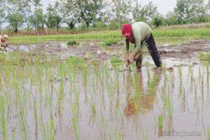 Upaya Pengembangan Pertanian