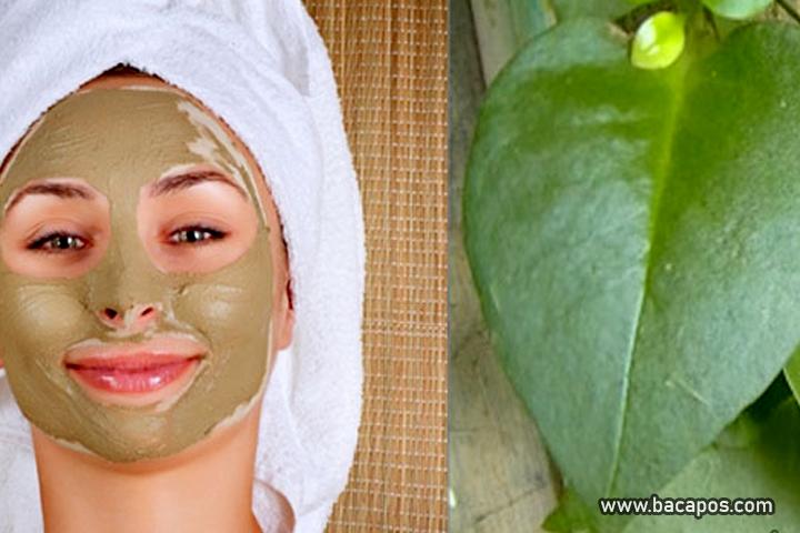 Cara membuat masker daun binahong serta manfaat