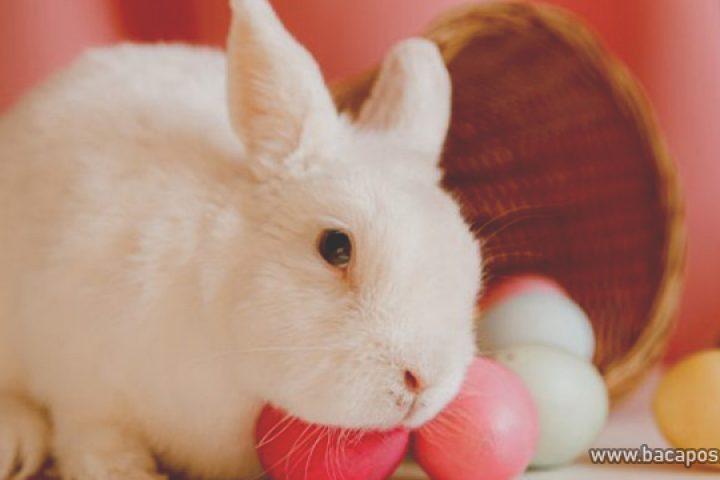 Makanan kelinci yang berbahaya ini sebaiknya jangan diberikan